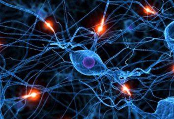 Neurochirurgia (Novosibirsk). Neurochirurgia Centro Federale di Novosibirsk: recensioni