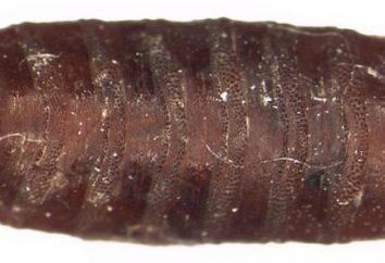 Que tipo de trabalho o cadáver realiza worms na natureza?