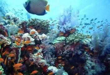 Die organische Welt des Atlantischen Ozeans: Merkmale und Beschreibung