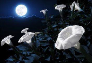 Características do dia lunar e seu significado. Dias Lunares: Descrição, Características e Significado