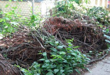 Comment choisir un broyeur: conseils et avis. déchiqueteurs de jardin des branches, l'herbe et les débris