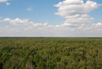 Parque Losinoostrovsky: uma pérola natural da região de Moscou