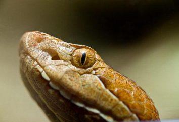 Shtomurtnik zwykły: siedlisko, zwyczaje węża