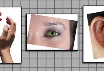 Visuals, audialy, cinestésico – os tipos de percepção