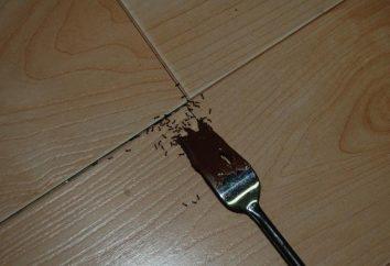 Un remède populaire pour les fourmis: comment traiter les insectes dans l'appartement?