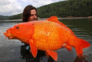 Interpretazione dei sogni: grandi pesci ai guadagni, e la piccola impresa ad un importante