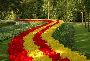 Per aiutare i principianti fiorista quando scavando tulipani per il trapianto, in modo che a loro piacimento l'occhio ogni primavera