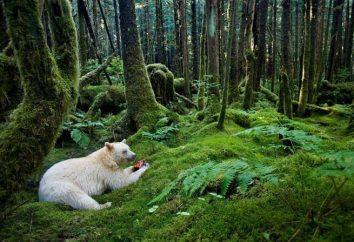 Natomiast przykłady i połączenie przyrody ożywionej i nieożywionej