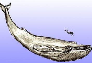 Jak narysować wieloryba w realistyczny i animowanych stylów
