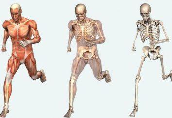 Como ser humano es: la estructura interna y externa del cuerpo humano