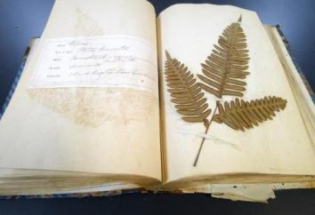 O que é um herbário e como fazê-lo?