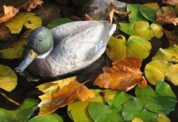 A nadziewane kaczki – klucz do udanego polowania.