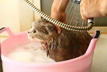 Jak kąpać prawo kotek?