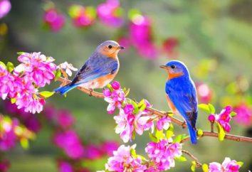 Proverbi circa le stagioni: primavera, estate, autunno e inverno
