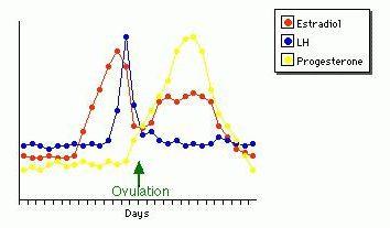 Jaka jest stawka 21 dniowego cyklu progesteron? Podczas badania na progesteron?