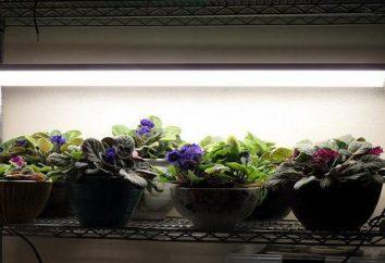 lampade UV per le piante: i tipi, presenta una selezione