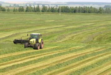 Hodowla w regionie moskiewskim: dowolny rozwój przemysłu, gdzie główne ośrodki hodowlane bydło?