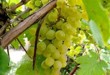 talee di uva bagagli in inverno. Come conservare talee di uva in inverno?