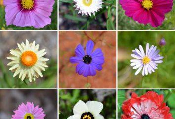 Jakie są kwiaty? Nazwy kwiatów ogrodowych. Biologia: kwiaty (budynek)