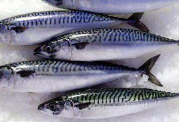 Makrela, marynowane w słoiku cebuli: przepis