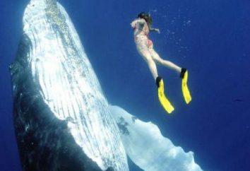 Nuotare con i delfini in un sogno. oneiromancy