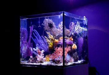 Modne nowość – nano-akwarium