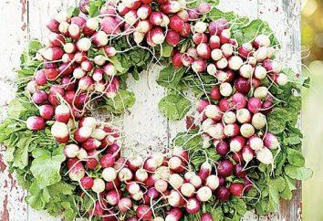 Rettich. Kultivierung und Pflege