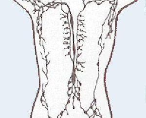 Ich frage mich, wo die Lymphknoten sind beim Menschen?