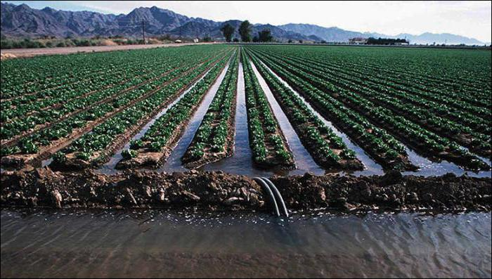 Che Cosa E L Irrigazione Tipi Di Irrigazione