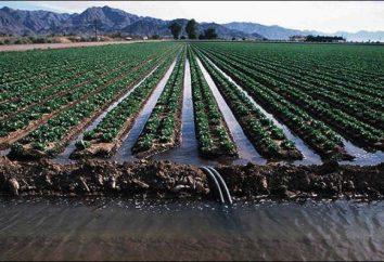 Qu'est-ce que l'irrigation? types d'irrigation