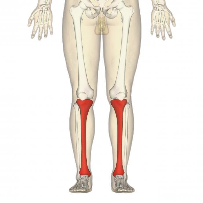 Huesos humanos de la extremidad inferior. Articulaciones de las ...