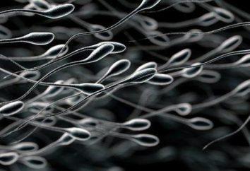 Gdzie powstaje sperma: jak i gdzie edukacja
