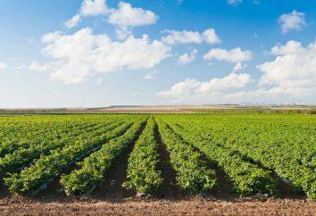 Agriculture du territoire de Krasnodar: la structure