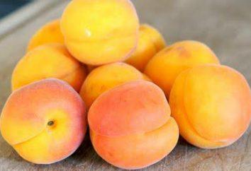 Ile kalorii moreli, jak również zawartość składników pokarmowych w miąższu owoców i nasion