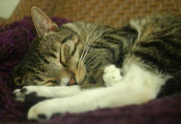 Jak zdezynfekować kota w niewłaściwym miejscu: porady i sztuczki