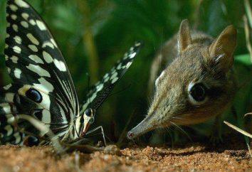 Ryjówka malutka: siedlisko i ciekawostki