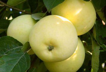 Apple arbre Moscou plus tard: description de la variété, photo, avis