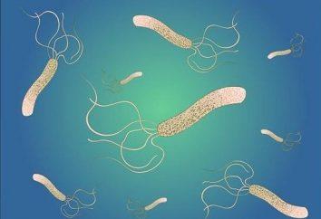 Co jest Helicobacter pylori? Leczenie środków ludowej