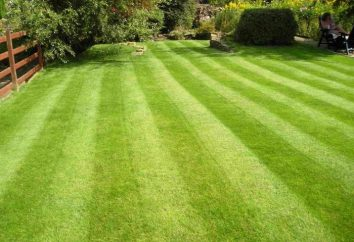 Facciamo un bel giardino – inerbimento