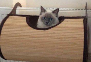 Hängematte für Katzen, die auf der Batterie: das Vergnügen, Ihr Haustier und Komfort für Sie