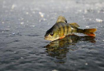 la mortalité des poissons en hiver: caractéristiques, causes possibles et la prévention
