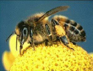 Quando é o Dia do apicultor?