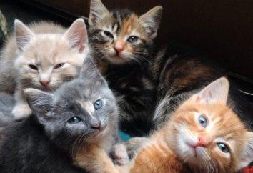 La elección de un gato nombres para niños de todas las razas y colores