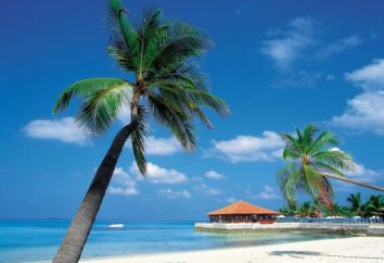 Bellezza Caraibi. Sea – un paradiso sulla terra