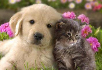 animal aide rapide – une clinique vétérinaire à Pskov