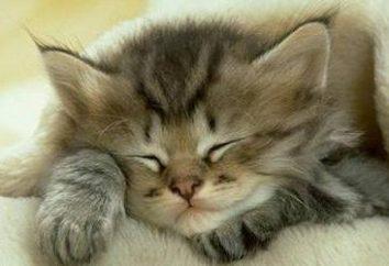 Cosa gatti sogno: interessante ricerca