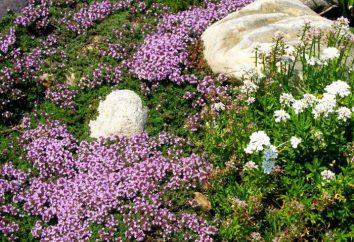 Le piante, strisciando lungo la terra: e il nome della fotografia