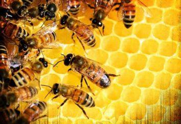 Medicamentos para abejas: especies, indicaciones de uso, los apicultores reales