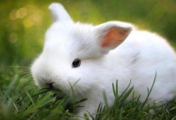 """""""Solikoks"""" für Kaninchen: Anweisungen, Nebenwirkungen, Kosten"""