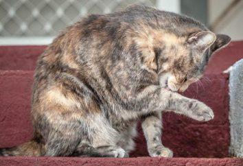 Jak koty umyć? Szampony dla kotów
